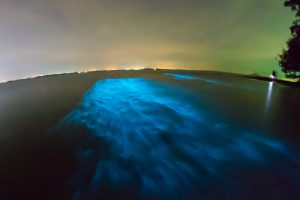 Bioluminescent water